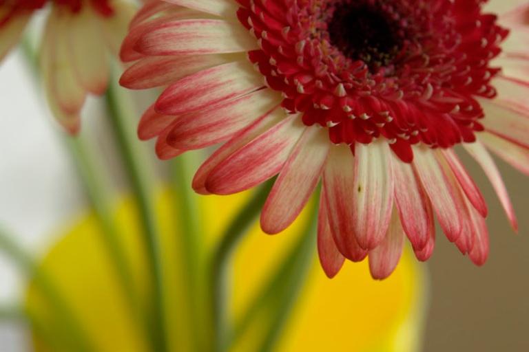 Flower - Australian Series