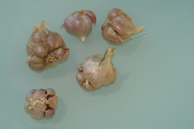 Garlic - Australian Series